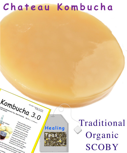 Our Traditional Organic Kombucha Mushroom Starter kit has been crafted with Organic Sugar and our Blend of Organic Black and Green Tea. Brews the common apple cidery slightly tangy Kombucha most folks appreciate.