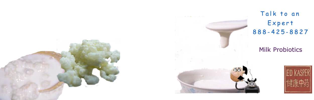 Live Milk Kefir Grains, Caspian Sea Yogurt, Tenekin,Kefir