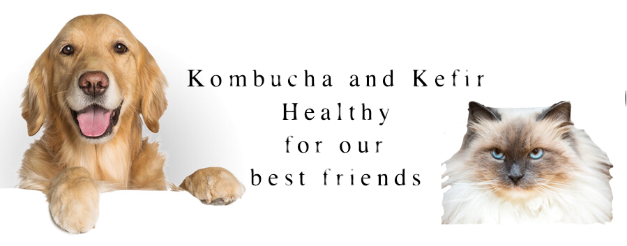 kombucha-and-kefir-healthy-best-friends.jpg