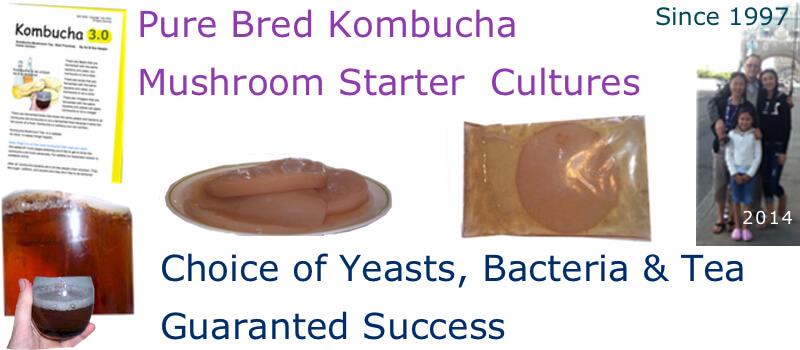 kombucha-mushroom-culture-starters-guaranteed.jpg
