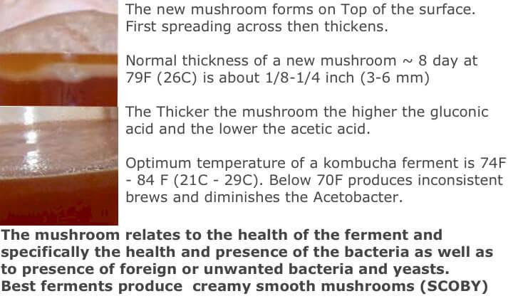 mushroom-forming.jpg