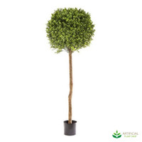 Boxwood Topiary 1.5m