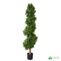 Boxwood Spiral Tree 1.9m