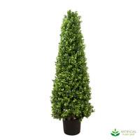 Boxwood Pyramid Tree 1m