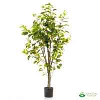 Ficus Tree 1.2m potted