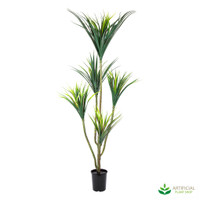 Yucca Tree 1.4m with pot