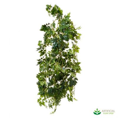 Cissus Bush 1.1m (UV Resistant)