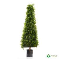 Boxwood Pyramid Tree 1.15m