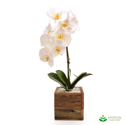 White Orchids in Timber Box 60cm (set of 2)