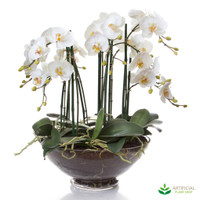 Phal Orchid in Glass Vase 60cm x 40cm