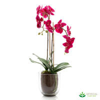 Orchid Fuchsia in Glass Vase 80cm