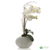 Phal Orchid in White Shell Vase 70cm
