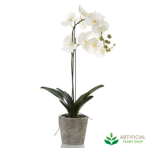 Best White Orchid in Clay Pot 84cm ZL22