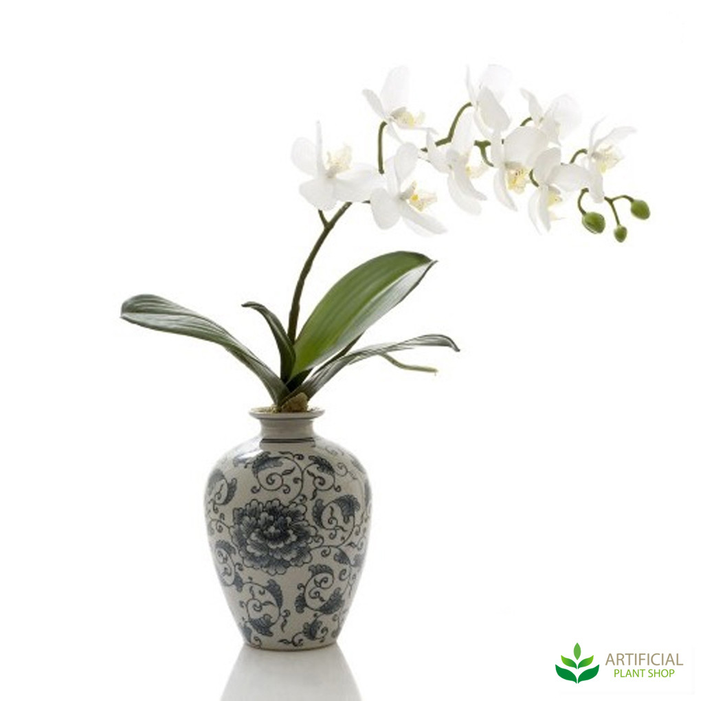 White orchid in blue white vase image 1 image 2 izmirmasajfo