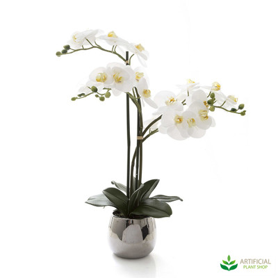 Phal Orchid in Silver Pot 67cm - Real Touch