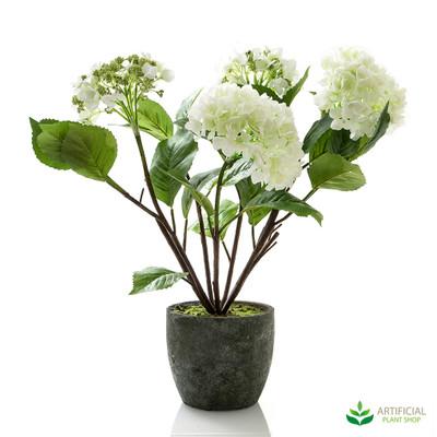 White Hydrangea in Pot 70cm