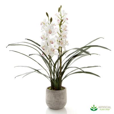 White Cymbidium Orchid in Pot 80cm