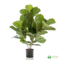 Fiddle Leaf Fig Tree 65cm