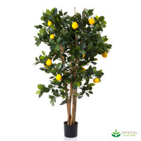 Lemon Tree 1.1m