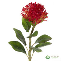 Red Pincushion Protea 70cm (pack of 6)
