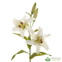 White Robrum Lilly 90cm (pack of 6)