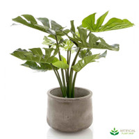 Monstera Potted 63cm