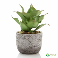Green Agave in Concrete Pot 23cm