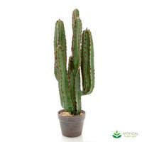 Desert Cactus 80cm