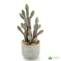 Desert Cactus Mix 32cm