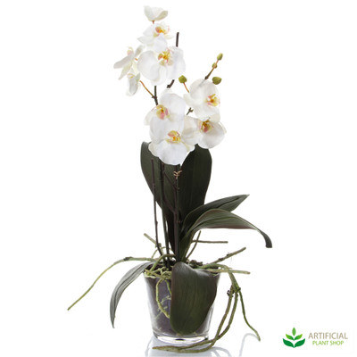 Phal Orchid in Glass Vase 58cm
