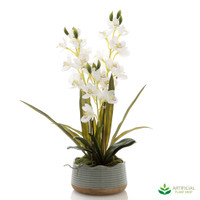 White Orchid in Sage Pot 65cm