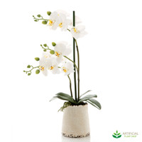 White Orchid in Ivory Pot 50cm
