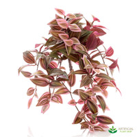 Wandering Jew Bush 51cm Red & Green (pack of 6)
