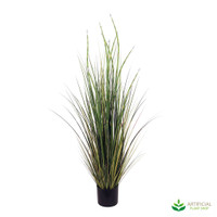 Horsetail Reed Grass in Pot 1.2m