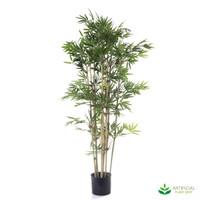Japanese Bamboo 1.2m (Natural Trunks)