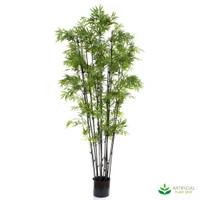 Japanese Bamboo 1.9m (Black Trunks)