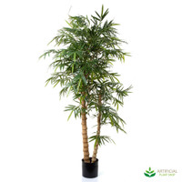 Royal Bamboo Tree 1.9m (Natural Trunks)