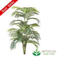 Areca Palm 1.5m without pot