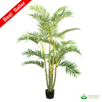 Areca Palm 1.5m (Multi-trunk)
