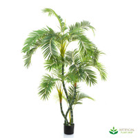 Parlour Palm 1.5m (Twisted Trunks)