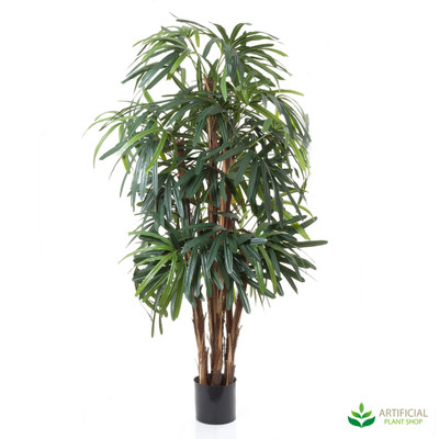 Raphis Palm 1.2m (thin leaf)