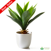 Agave Potted 27cm (set of 2)