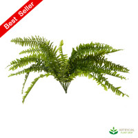 Boston Fern 65cm