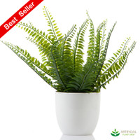 Boston Fern in white pot 28cm
