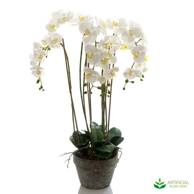 Orchid in Terracotta 95cm