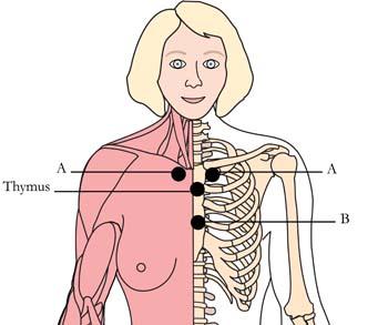 os-ova-menstrual-menopausal-cell-points-tachyon-product.jpg