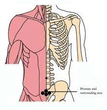tachyon-products-os-24-prostate-tlc-points.jpg