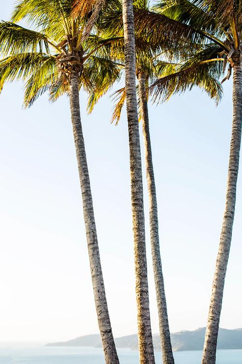 x1https://cdn3.bigcommerce.com/s-b76sgj/products/466/images/3733/palms-xl__76513.1527650092.1280.1280.jpgx2