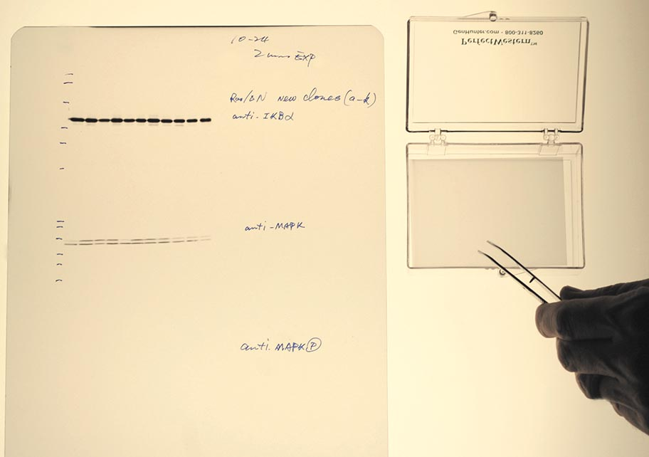perfectmembrane-gelimage-web.jpg