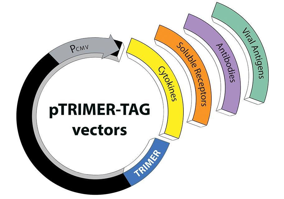 pTRIMER-TAG vectors image